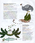 cucinafacile-dicembre-2011-p23