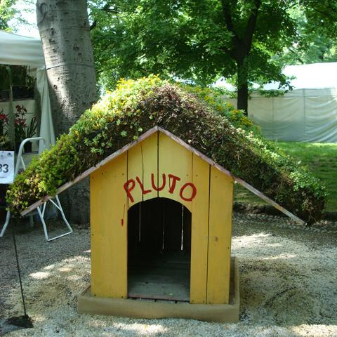 un tetto vegetale anche per Pluto!