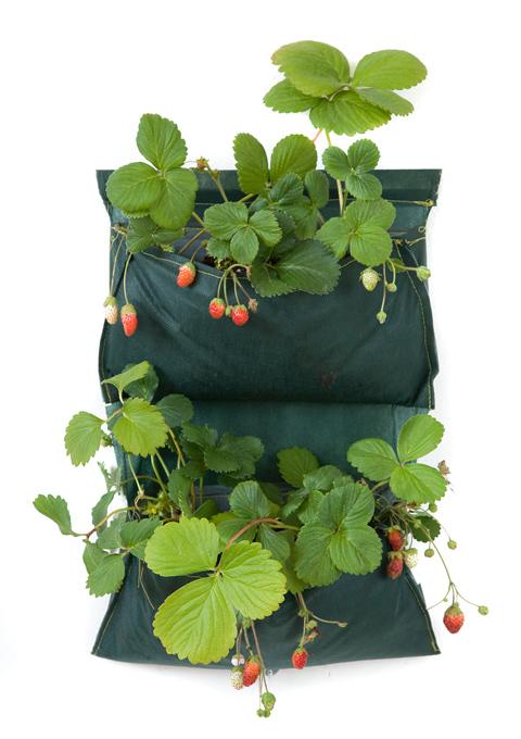 SakkOrto il vaso morbido ecosostenibile per il verde verticale di 13Ricrea