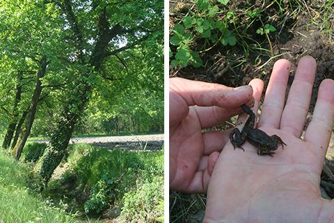 © gli alberi inclinati a causa delle nutrie e una rana uscita da poco dal letargo invernale