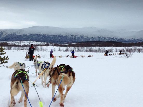 Dog Sledding a Tromsø (©foto Sandra Longinotti)