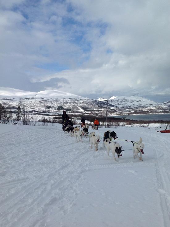 Dog Sledding Villmarkssenteret (©foto Sandra Longinotti)