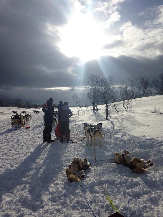 Dog Sledding Villmarkssenteret, rientrati alla base (©foto Sandra Longinotti)