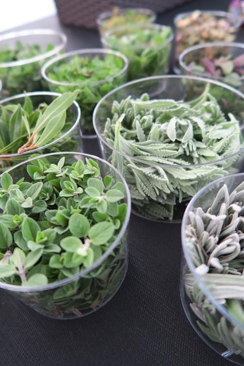 erbe aromatiche, Alpin Herbs | ©Sandra Longinotti