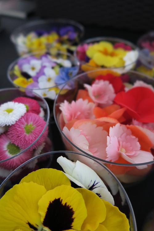 fiori eduli, Alpin Herbs | ©Sandra Longinotti