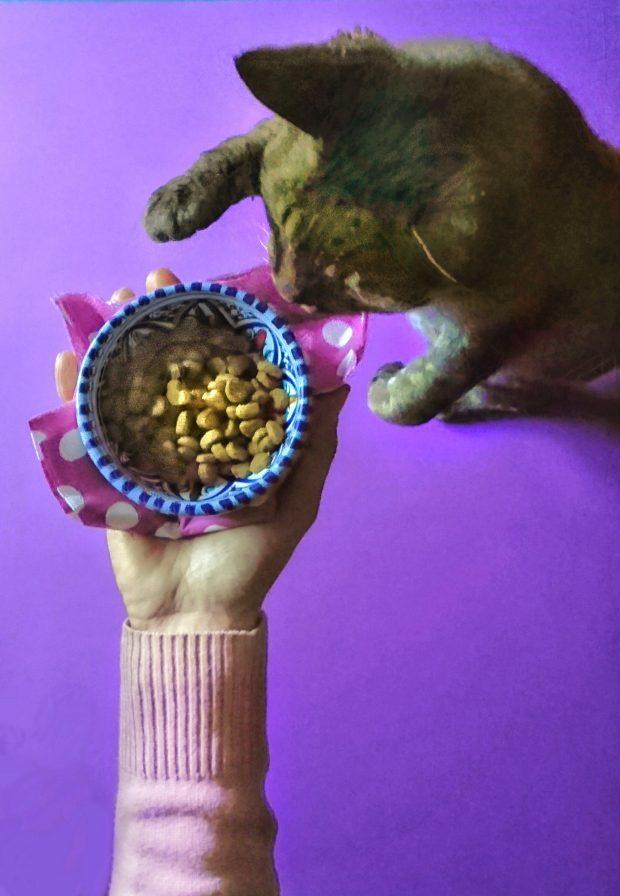 Gecchio e i croccantini al Pollo e orzo integrale Purina Beyond | ©foto Sandra Longinotti