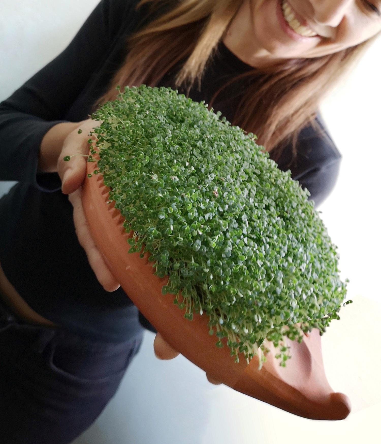 Per i semi di Chia, che sono mucillaginosi, come germogliatore utilizzo un riccio di terracotta | ©foto Sandra Longinotti