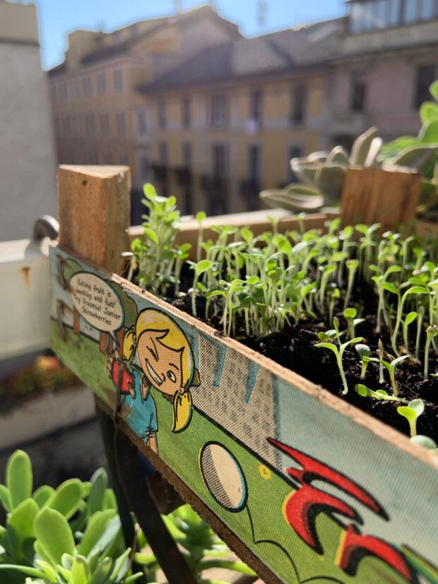 le insalate di tendenza sono tante e crescono benissimo in contenitori poco profondi, un'idea è riutilizzare le cassettine in legno delle fragole | ©foto Sandra Longinotti